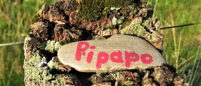 Wörtchen der Woche No 37 - Kölle jeschöddelt - Foto: pipapo